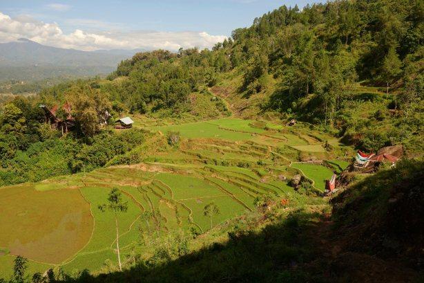 29 - rice field view again