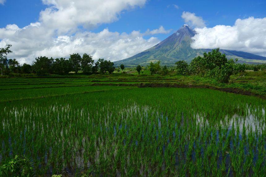 13 - vue sur le volcan du site de cagsawa