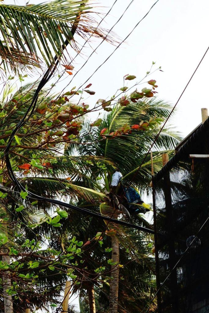 23 - les kites poussent dans les arbres