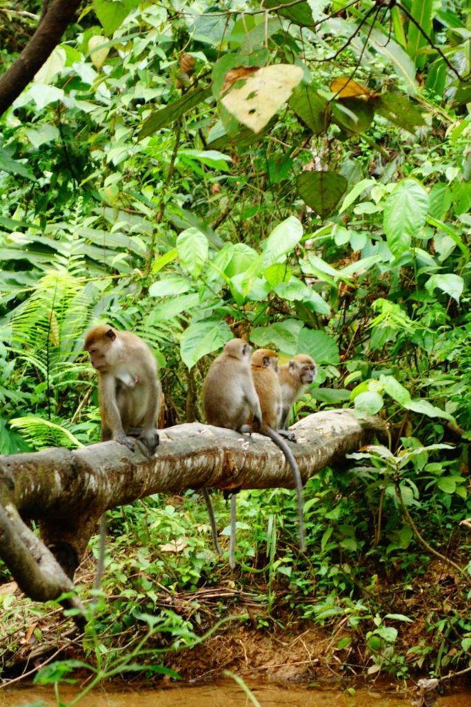 la bande de macaques