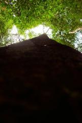 43 - la longueur des arbres, on a pas pris de coup de soleil