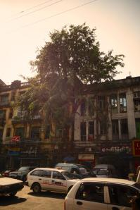 Save the trees... Not so many trees in Yangon downtown