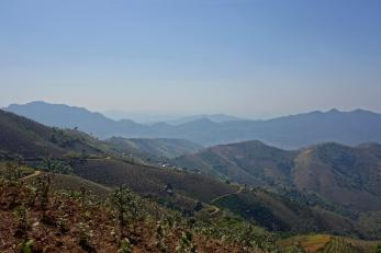 Other view onto tea plantation