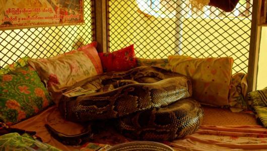 Snake monastery