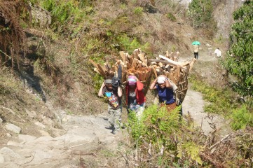 Group of women and children carrying their load of wood. THere is no car or bike here