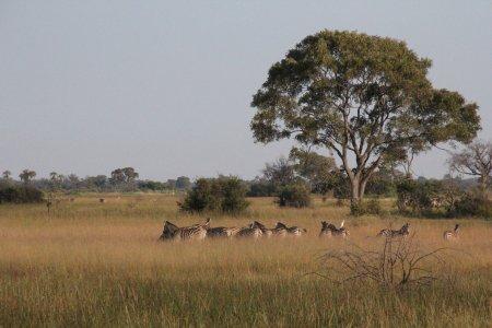Morning walk in the delta
