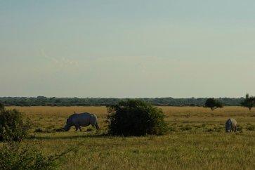 Rhino in Khama Rhino Sanctuary
