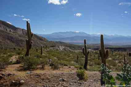 Cafayate & Cachi Loop from Salta