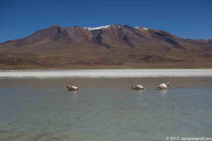 Flamingoes on the laguna hedionda