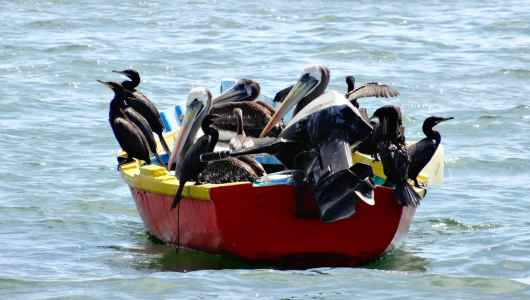 Sorry mate, no more room on my boat!