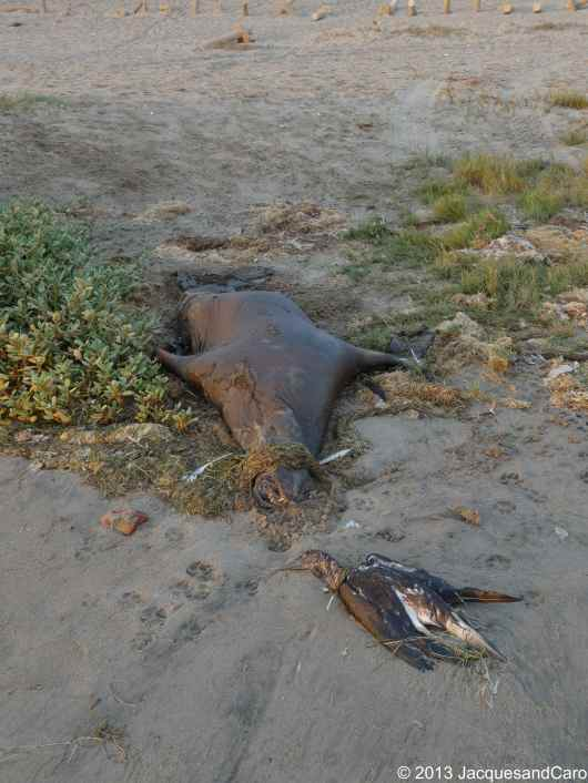Just to mention part of paracas shore was filled up with dead birds and fine lions… not sure why?