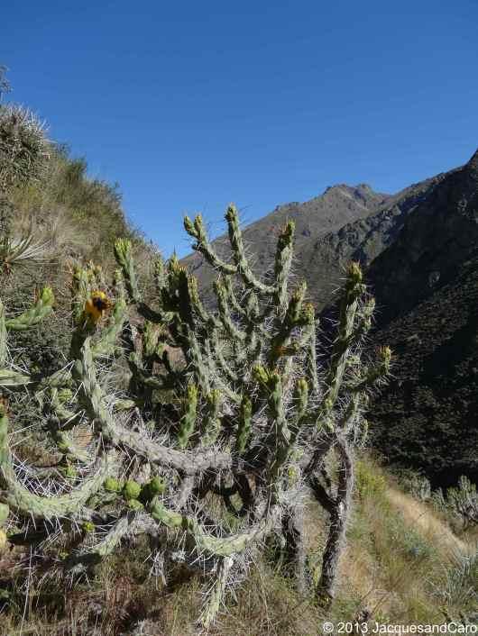 Cactus, love it!!