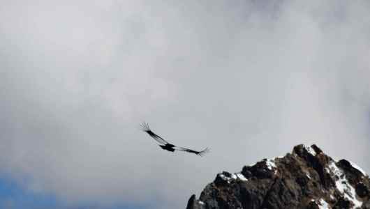 Three condors welcomed us
