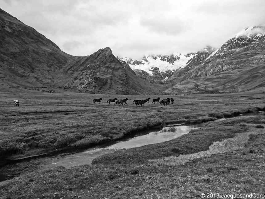 Wild horses running around the camp