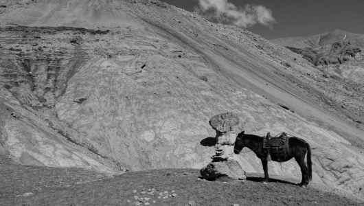 Horse kindly waiting at the pass
