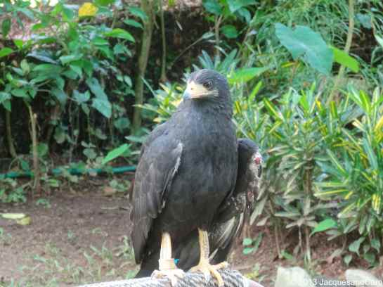The centre receives and rehabilitate wildlife such as this one