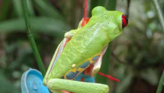 Red eyes, blue, yellow and green skin… A good mix of colors...