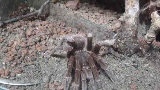 Nice spider