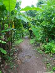 The road of Little Corn Island