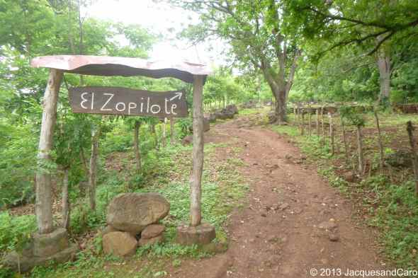 Welcome to El Zopilote