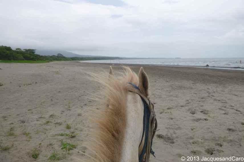 Horse, island, lake...