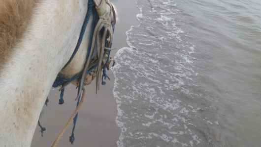 Horse riding experience on the shore of Nicaragua lake